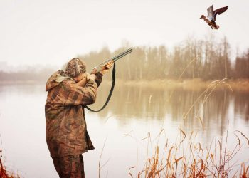hunter shooting from shotgun to the flying duck