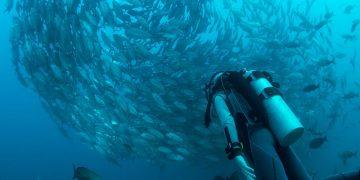 scuba diver with a bait ball