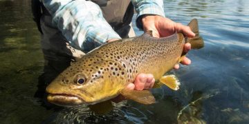 How to Catch Big Brown Trout - Outdoor World Reviews